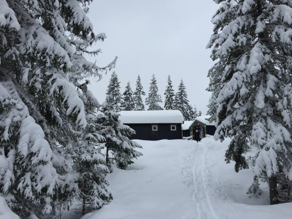 Plutselig dukker det opp ei liten hytte mellom snødekte trær.