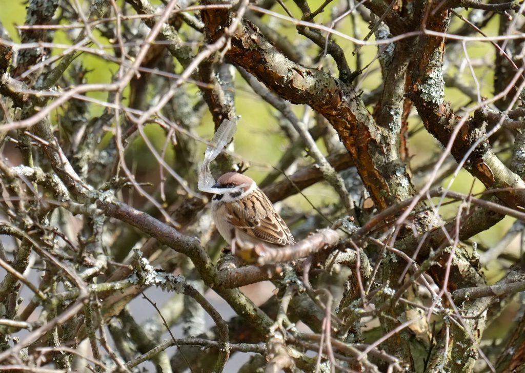 Dyr- og fugleliv tar stor skade av vår forsøpling