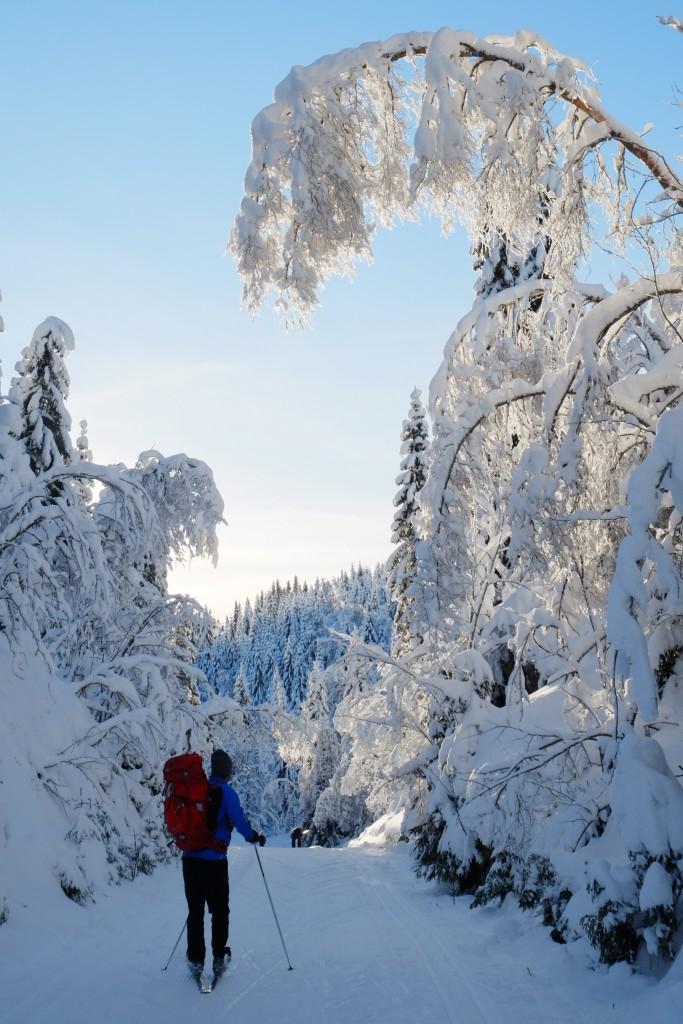 Vinter i Nordmarka