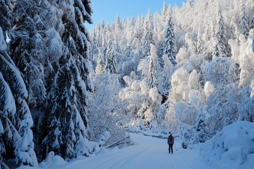 Nordmarka er både vilt og vakkert i januar