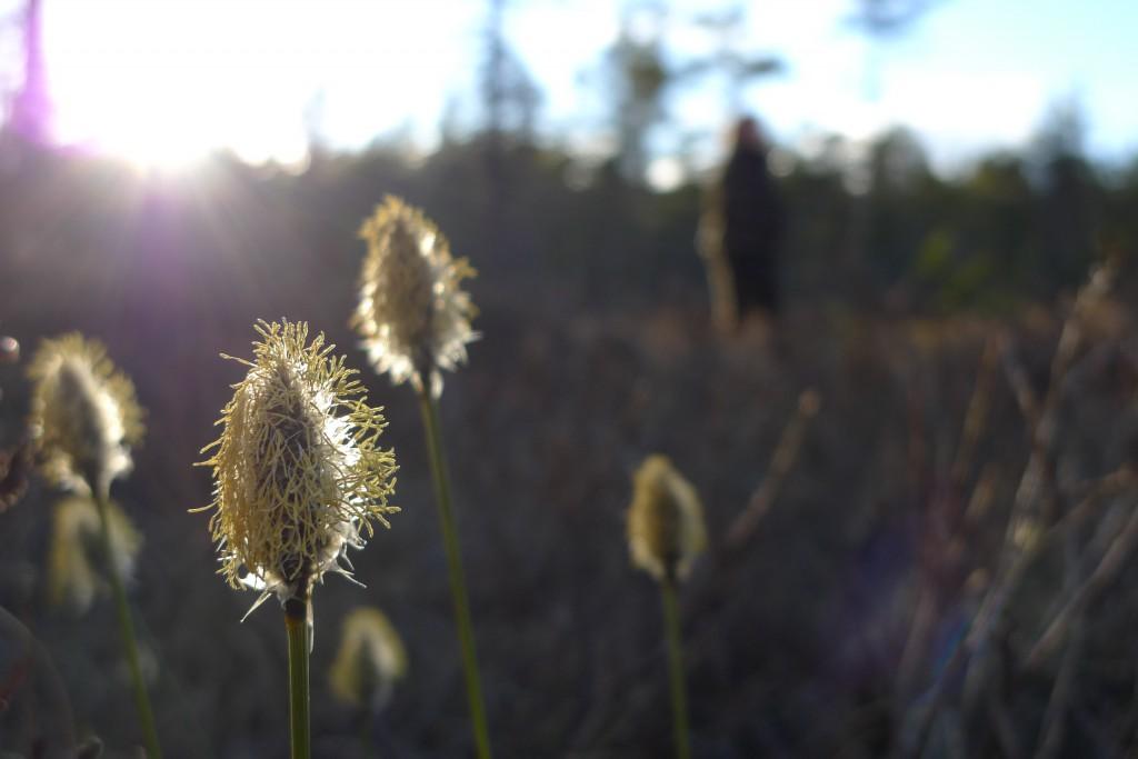 Vi finner vårtegn i skogen og nyter varmen fra solstrålene