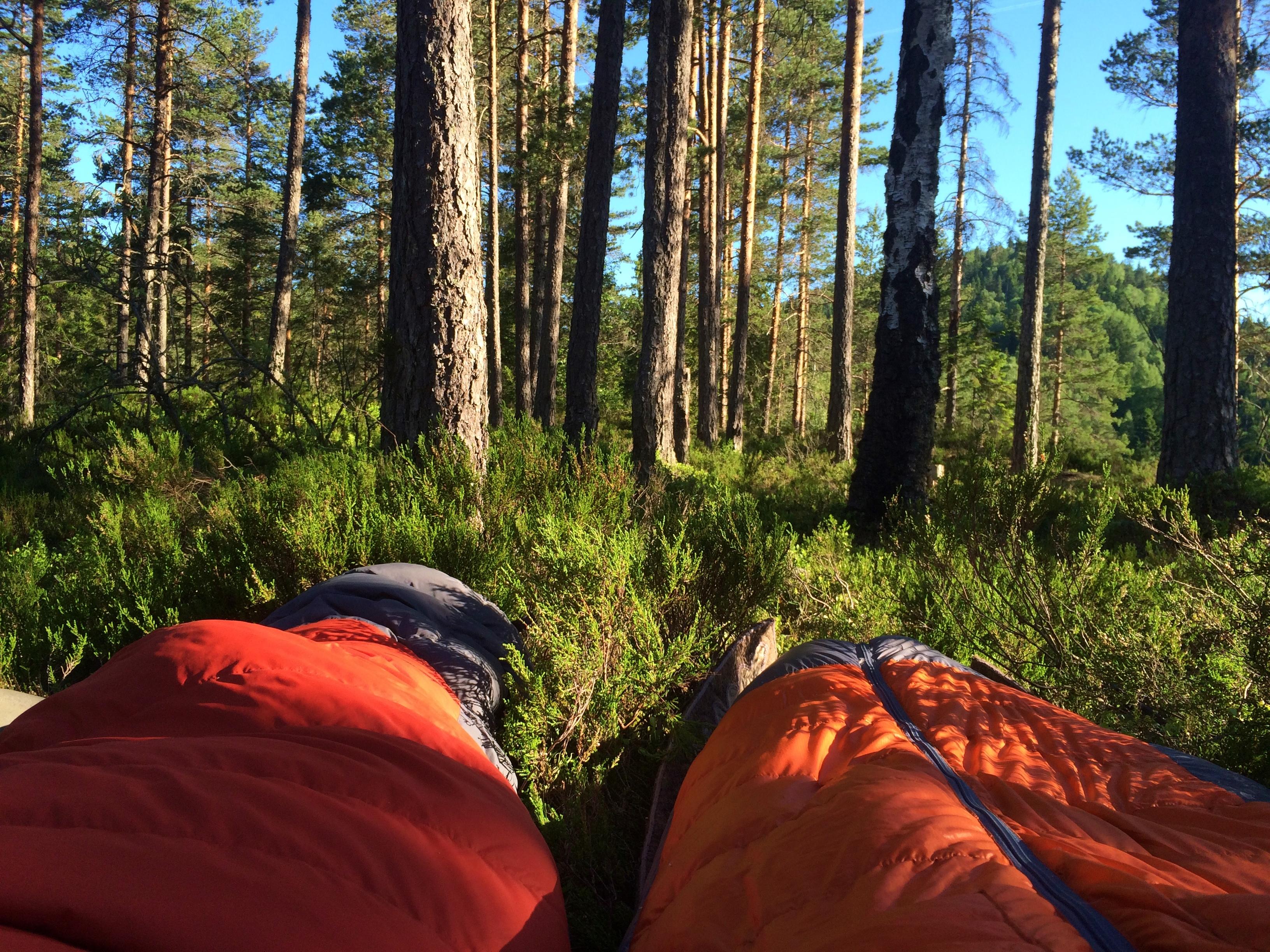 Sove i naturen