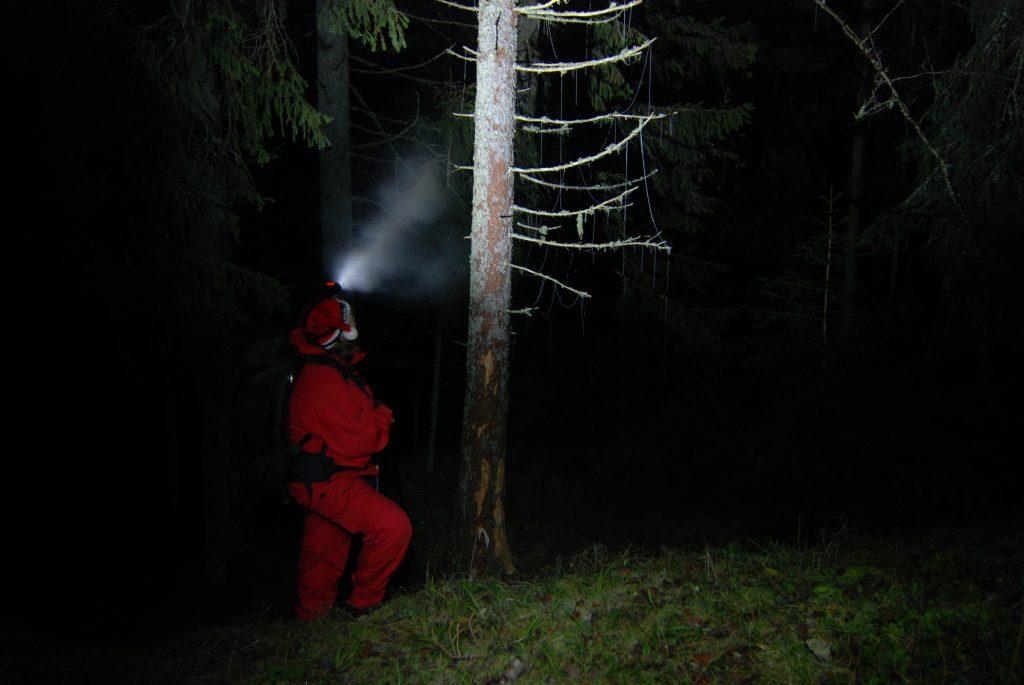 Østmarkas grantrær er pyntet til jul